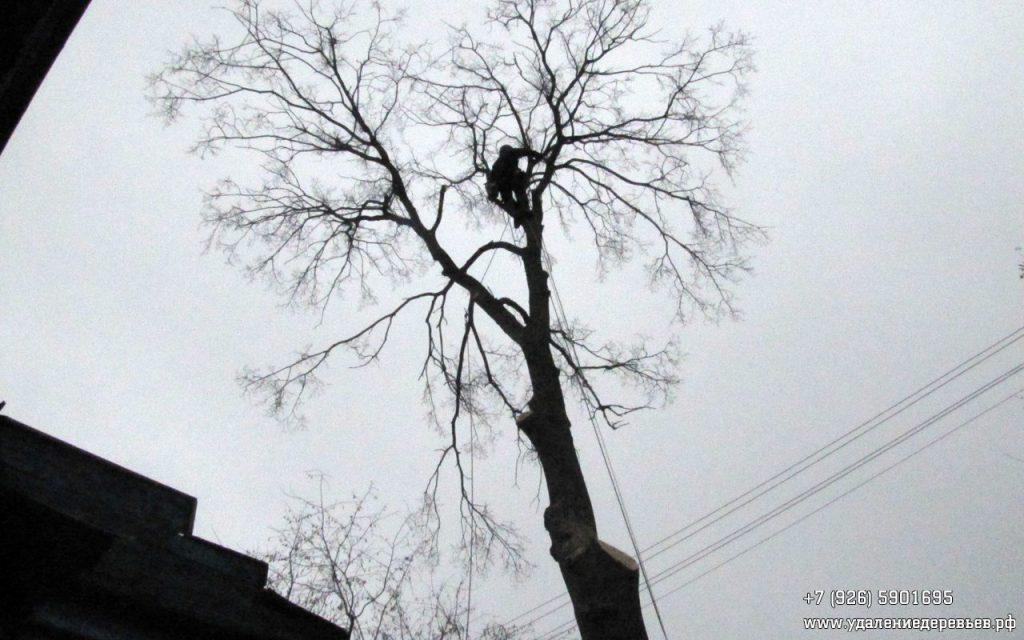 арборист на дереве. удалениедеревьев.рф