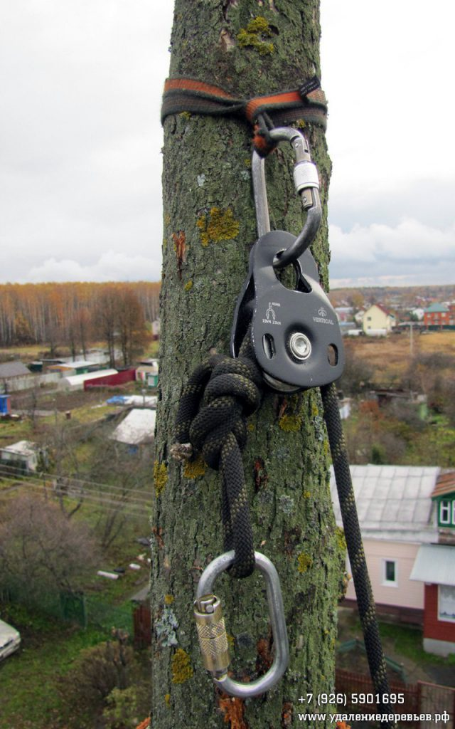 веревка и дерево