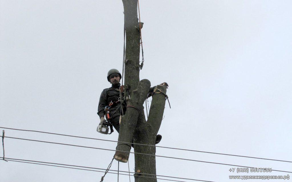 арборист на дереве