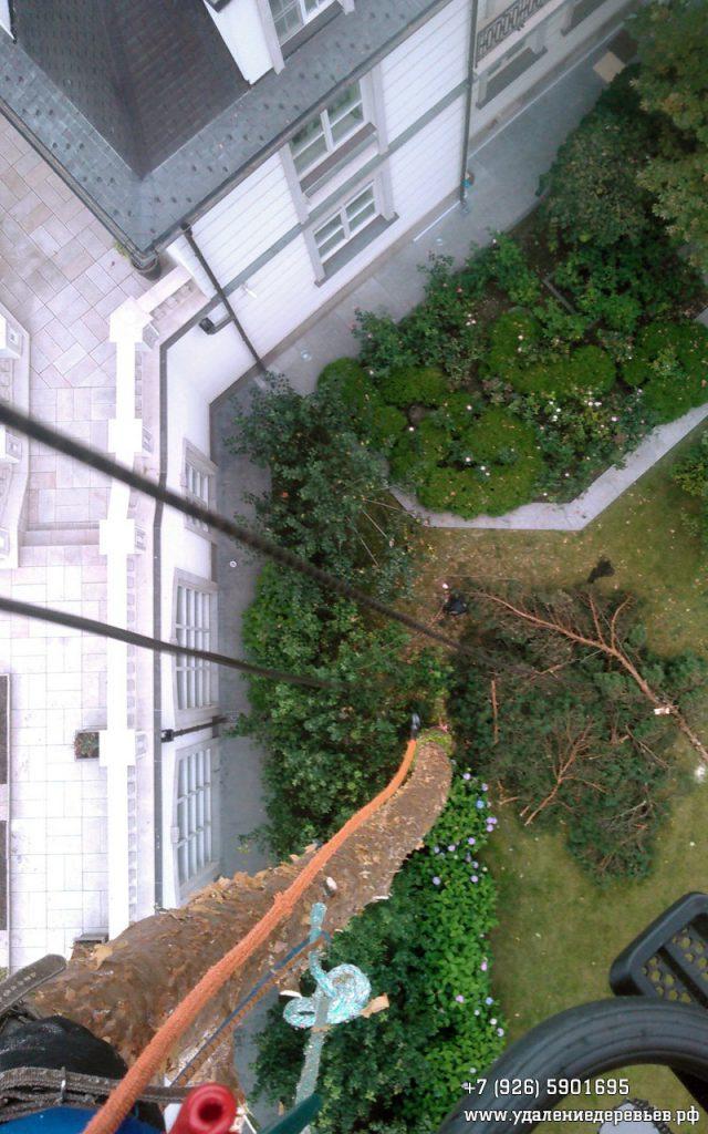 Удаление сосны частями с завеской - вид сверху (Домодедовский район Московской области)