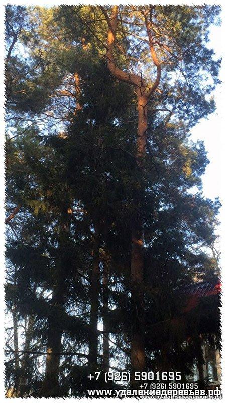 Кошка на дереве в Раменском районе Московской области - удалениедеревьев.рф
