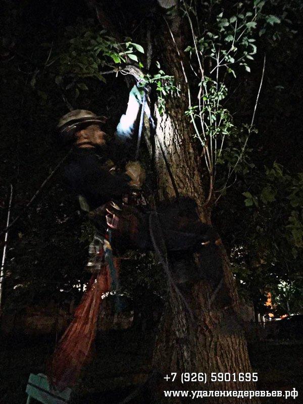 Начало подъёма на дерево за квадрокоптером - удалениедеревьев.рф