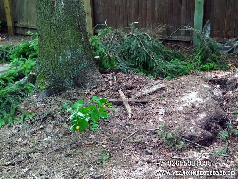 Фрагментация корневого кома земли, возникновение риска выворачивания дерева с корнями во время сильного ветра - удалениедеревьев.рф