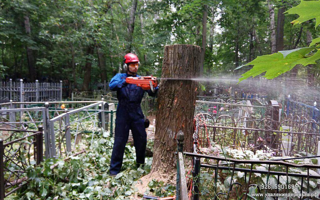 Спил дерева (тополь) на Кузьминском кладбище в Москве