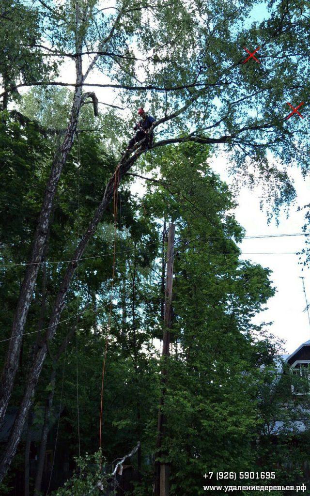 Удаление аварийного дерева (берёза с гнилью ствола) над проводами, Лобня, Московская область