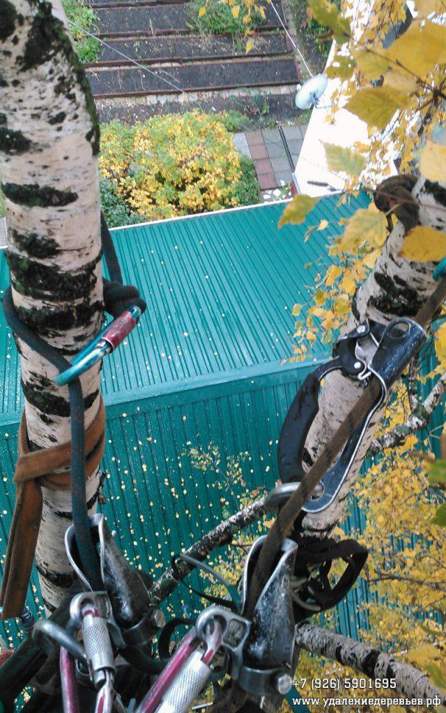 Обрезка ветвей берёзы, нависавших над домом, Томилино (Люберецкий район Московской области)
