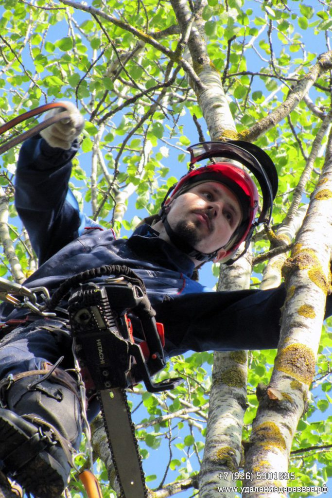 Спил дерева во Владимирской области возле забора и проводов
