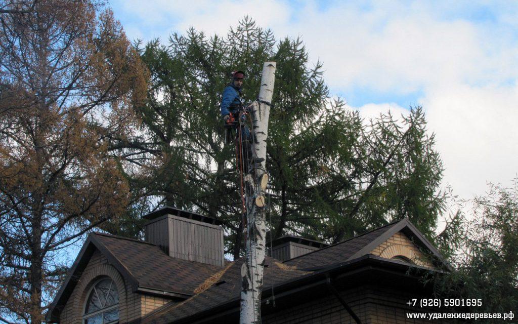 Удаление дерева частями с завеской в очень ограниченном пространстве в Мытищах (Московская область)