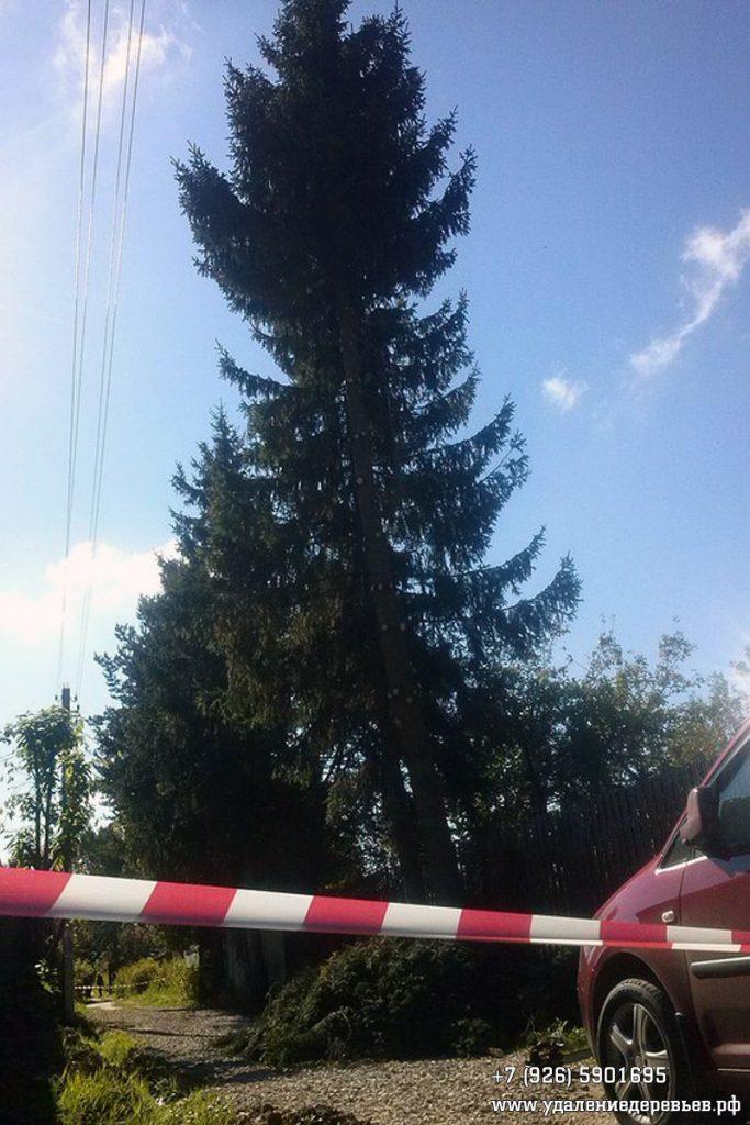 Спил наклонённой на провода ели в Чеховском районе Московской области
