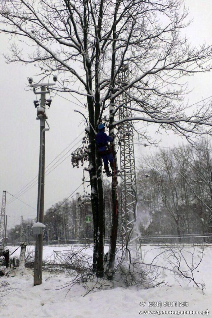 Валка дерева возле проводов частями (Одинцовский район Московской области)