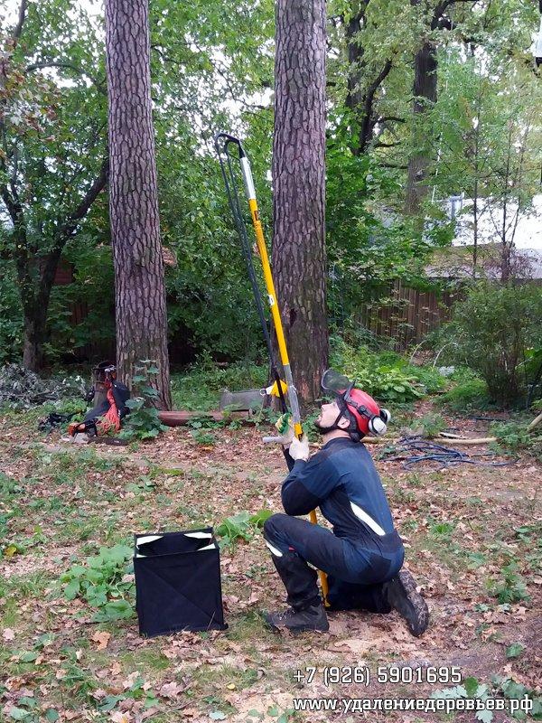 Заброска на дерево репшнура для протягивания верёвки