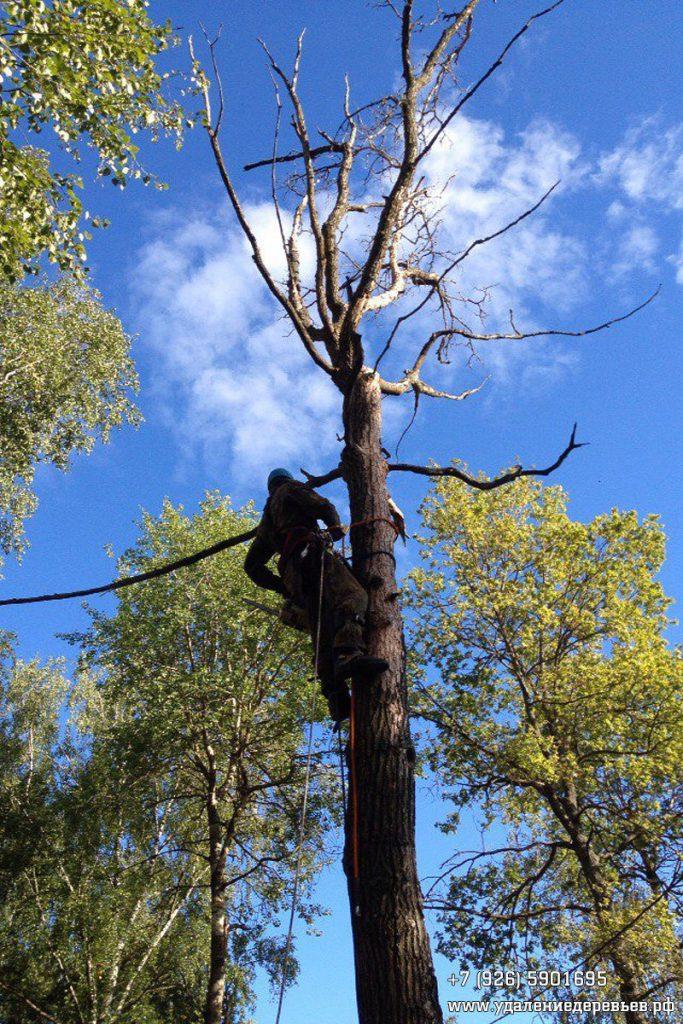 Удаление аварийного дерева (дуба) во Владимирской области