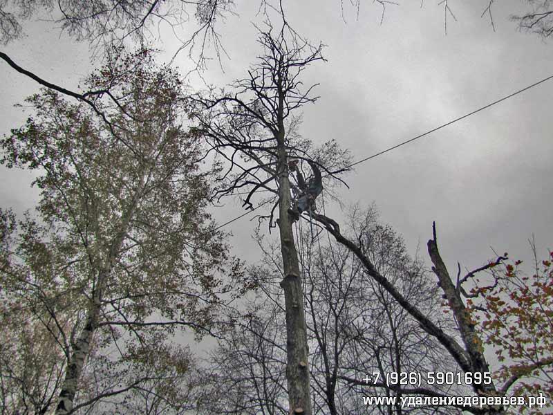 Спил веток дерева рядом с проводами