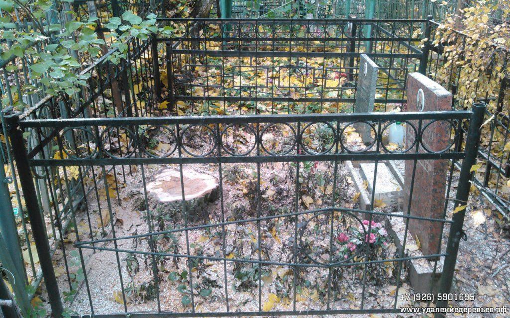 пень на кладбище рядом с г.Пушкино