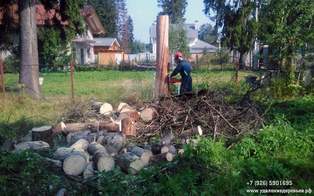 Спиливание остатка ствола сухой ели, стоявшей рядом с проводами (Алабино, Московская область)