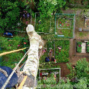 Спил деревьев на кладбищах в Москве и Московской области